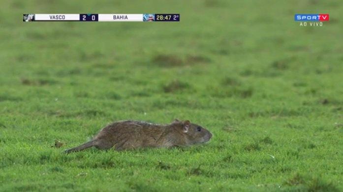Uma rato invadiu o gramado de São Januário durante Vasco x Bahia https://t.co/qTq0NykbBo