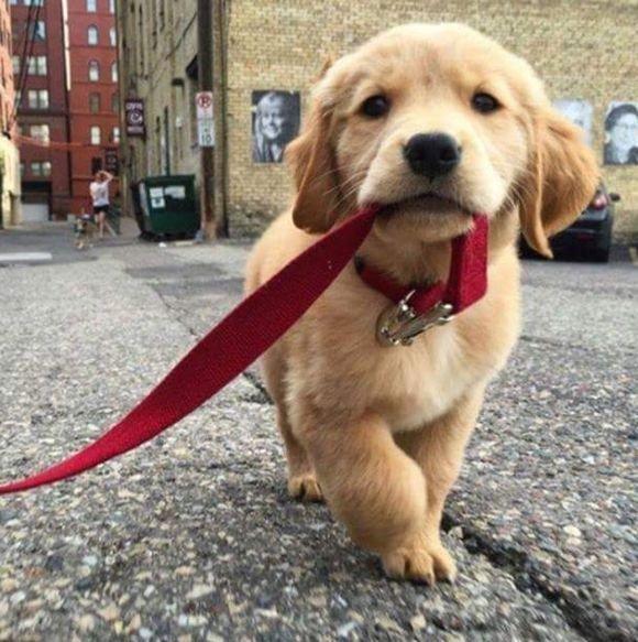 【RT100UP】 見てるだけで幸せになる。人類の永遠の親友、犬たちのほんわかジワっとする18枚の画像 https://t.co/UVk7ChBOzV