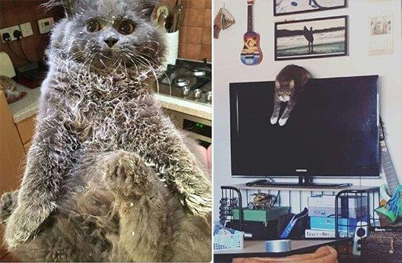 カラパイア : やらかしキャット。猫のいたずらの犯行現場が集められたインスタグラムのアカウント「キャット・シェイミング」 https://t.co/lRN0IZlwhJ