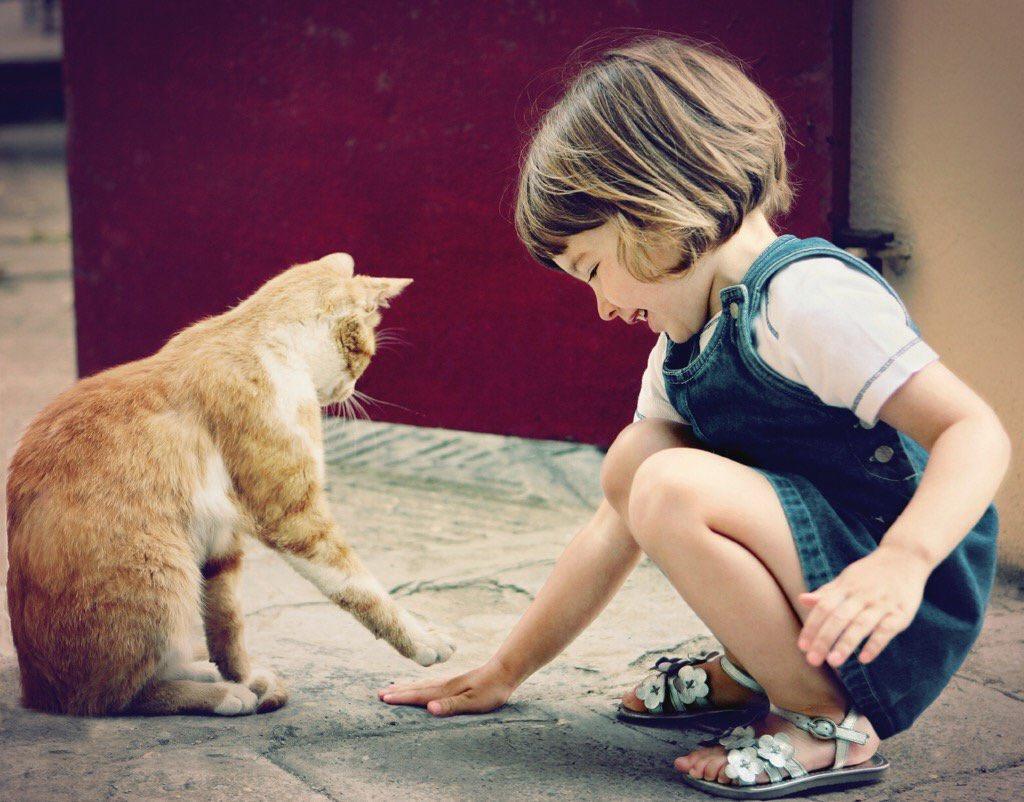 Кошки и люди картинки приколы, нарисовать картинку выздоравливай