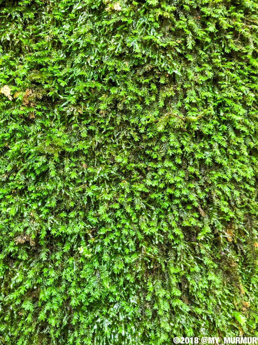 よーく見てみると・・・緑色の効果で副交感神経が優位になってリラックス!(効き目には個人差があります) あ、ほらほら落ち着いて。リラックスリラックスぅ〜