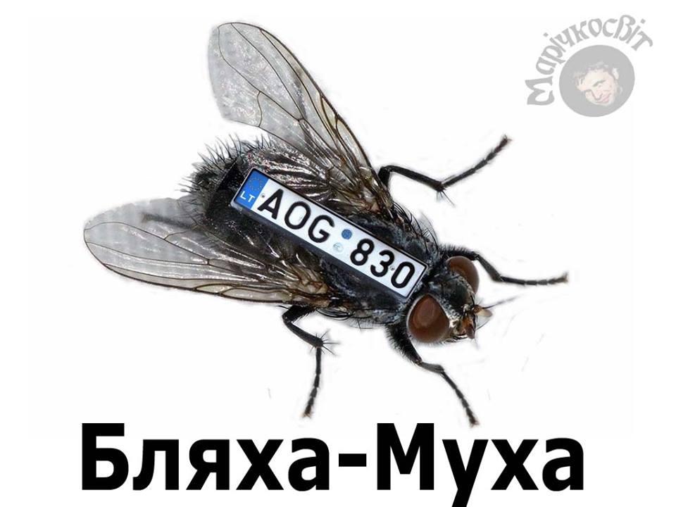 Бляха- муха прикольные картинки