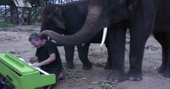 Meet The Travelling Pianist Who Plays Classical Music For Elephants Foto