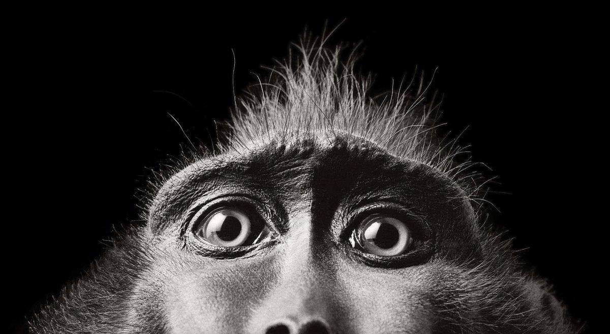 Tim Flach immortalise des #portraits d'#animaux avec une émotion et une simplicité saisissantes. Il prouve que les animaux ont un #reel côté #humain …