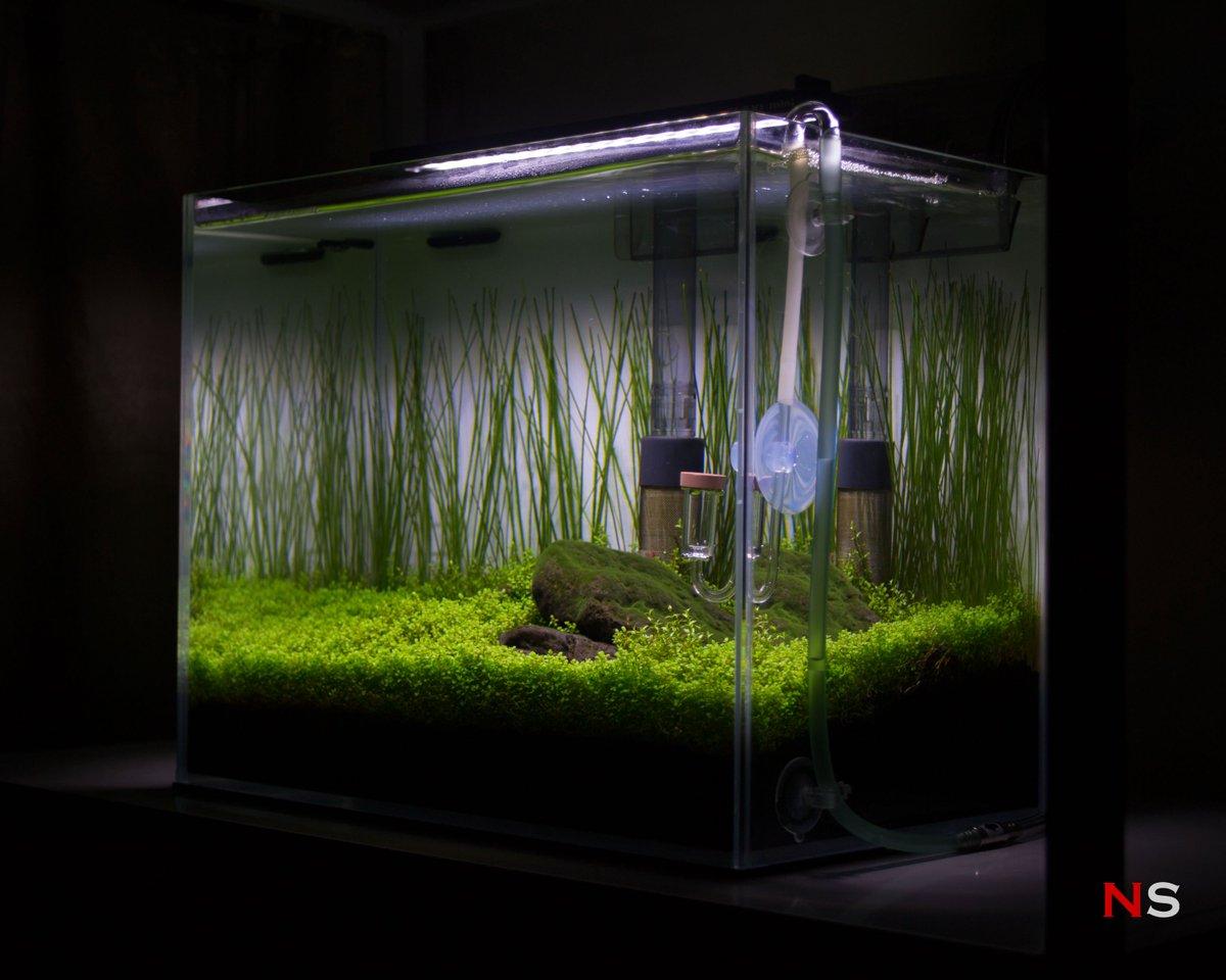 Nano Iwagumi Aquascape