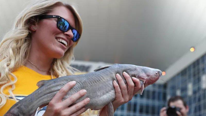 Meet my new best friend, a giant duck-eating catfish https://t.co/Jc4xPn8hz3