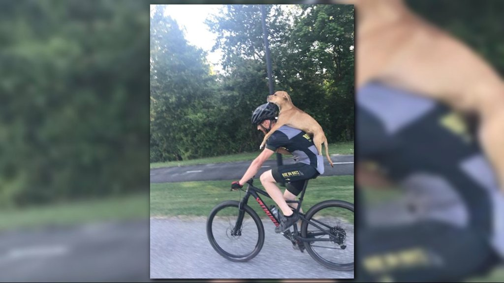 Cyclist carries injured stray dog on his back, finds pup a forever home https://t.co/GRMjCKDMfq