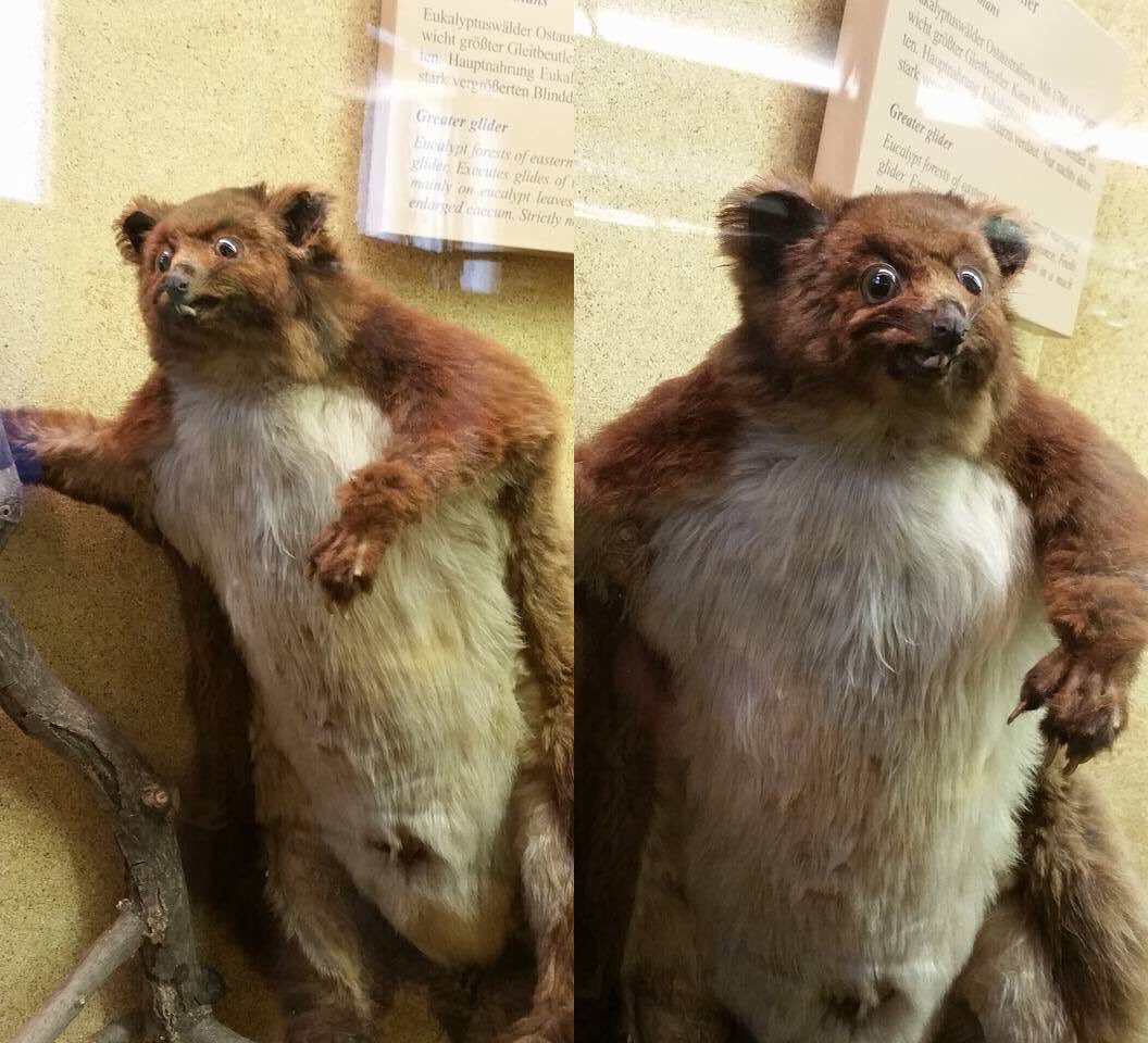 Crap Taxidermy On Twitter Quot When The Diets Going Well But