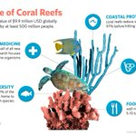 Image for the Tweet beginning: Coral reefs provide a bedrock