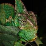 Welche Farbe sollte ein Chameleon im Idealfall für das perfekte Foto haben? Harry schickte uns diese Aufnahme in die Canon Galerie. Wir mögen grün. 😊 #canonDEU