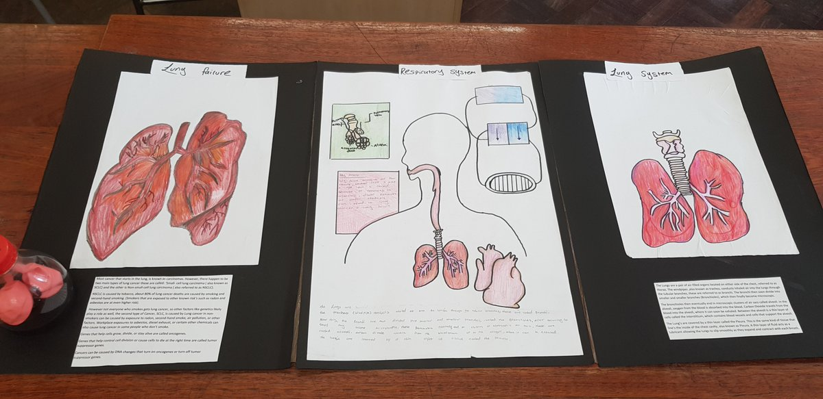 Kingsmead Science Fair Was Very Impressive Today Students From Years 7 8 Carried Out Research Projects In The Library First Then Displayed Their Work