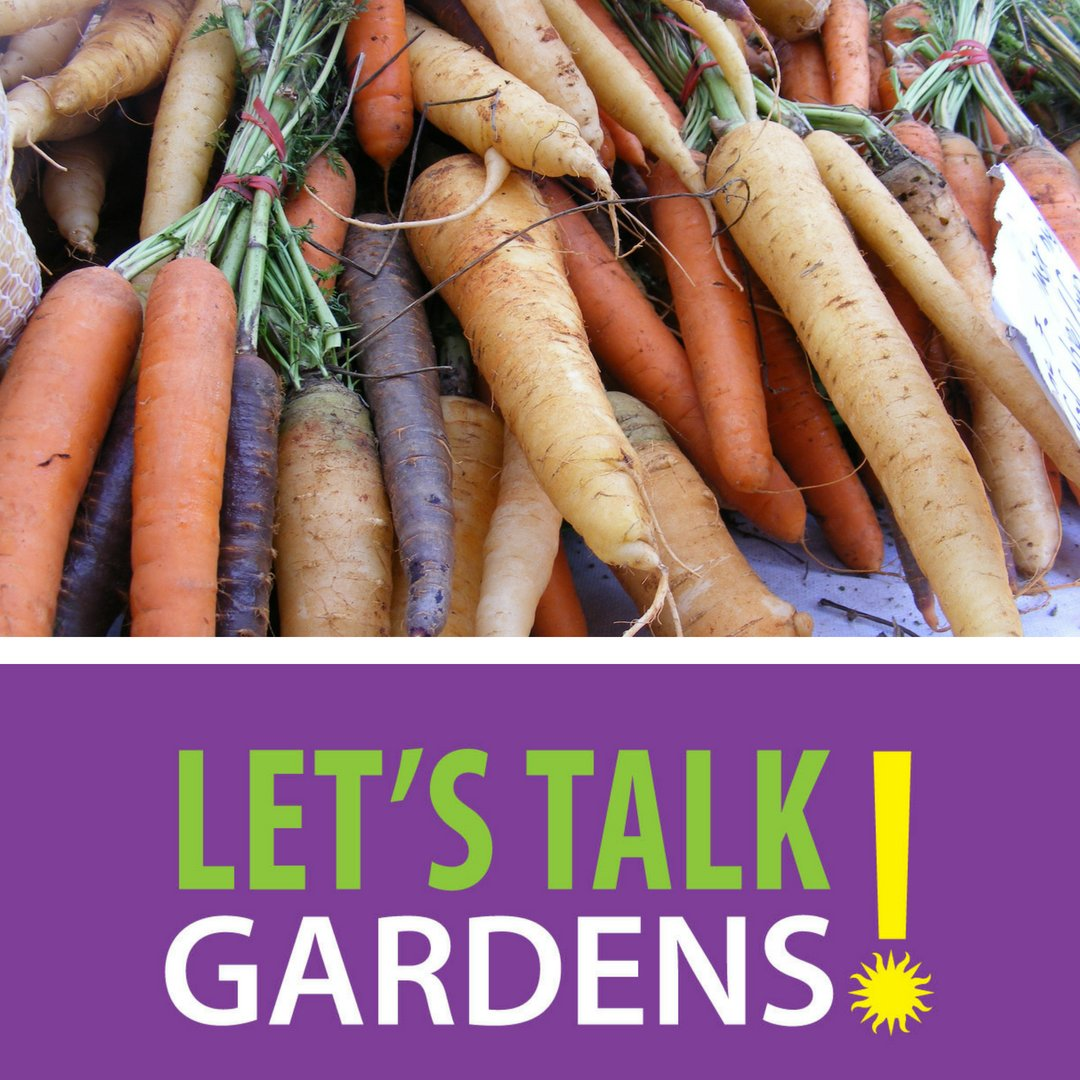 This week Let's Talk Gardens is all about fall veggie gardens! Learn how to transition your garden from summer to fall so you'll have root veggies and tubers critical for your tasty fall recipes! See you in the #HauptGarden at 12:15pm this Thursday. #LetsTalkGardens #SIGardens