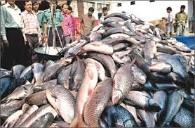 Meghalaya: No ban on Sale Of Fish till evidence of formalin presence https://t.co/jZxdSjYr0s https://t.co/8MBZ6Sg6vs