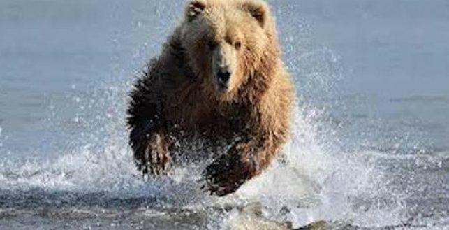 #Video Oso grizzly intenta atacar a un hombre que utiliza kayac para atravesar río canadiense https://t.co/PeN1hlPlvC
