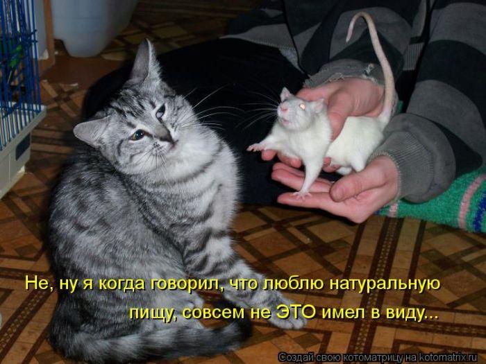 Картинки котят с надписями прикольными, года мальчику своими
