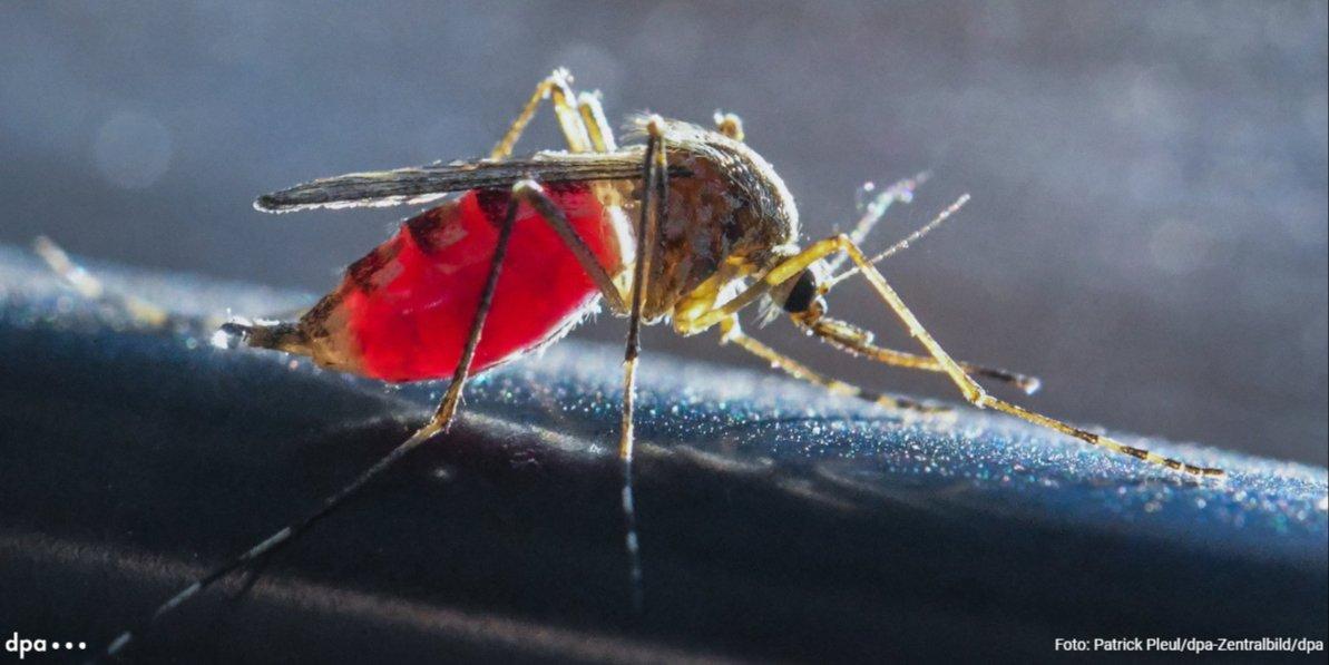 Mücken im Anflug - darunter auch tropische Arten https://t.co/oCpC6Rl6D8 via @RNZonline (ae)