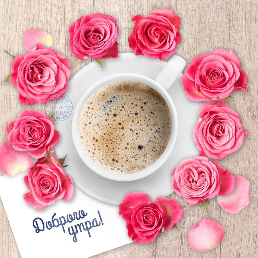 картинки большие цветы с добрым утром вытряхивают старой емкости