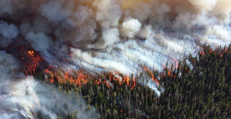 Staten får kritik för hanteringen av skogsbränderna https://t.co/7JXXsURGwx #svpol #nyadagbladet https://t.co/BMr6vvdyNt