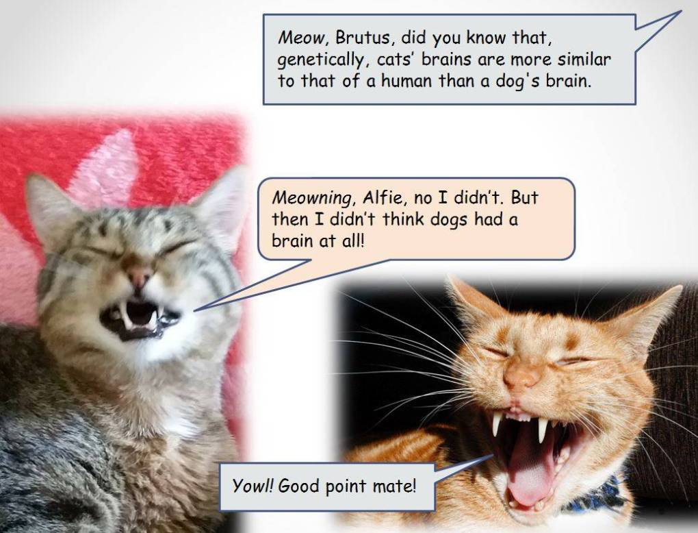 Katzenworld Blog On Twitter Fun Facts With Alfie Brutus