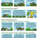 What do you do if you find a turtle crossing the road? I collaborated with @AlongsideWild to tell you how to save our shelly pals. https://t.co/XrzAf3fQuV