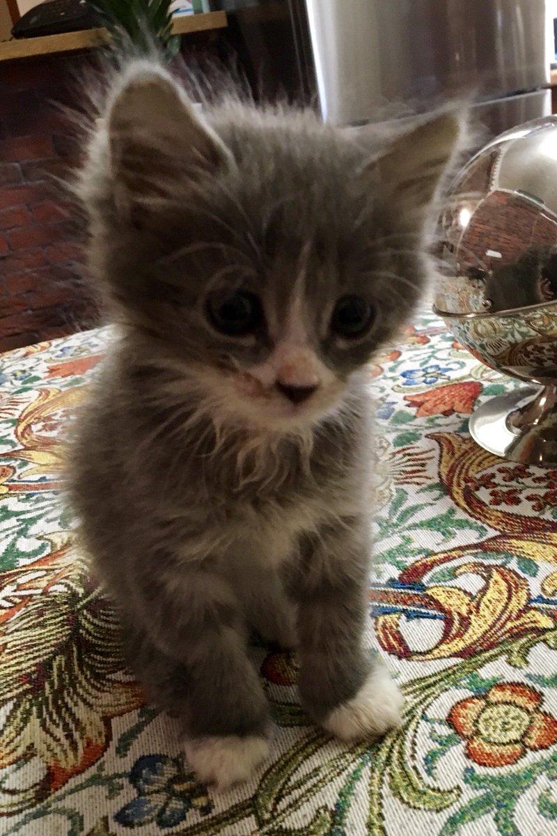 Самара. Прошу максимальный ретвит. Котята в дар, найдены 3 недели назад в яме , явно от домашней кошки. Здоровы. Лоток на отлично. Помощь в стерилизации по возрасту.