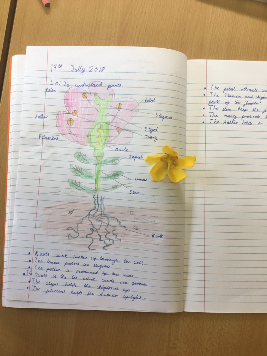 test Twitter Media - We are learning about the female and male parts of a plant. #gorseyscience https://t.co/EoIzzxYDoi