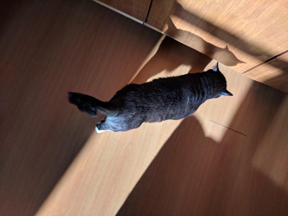 Как Сделать Чтобы Кот Похудел. 5 эффективных способов помочь кошке похудеть