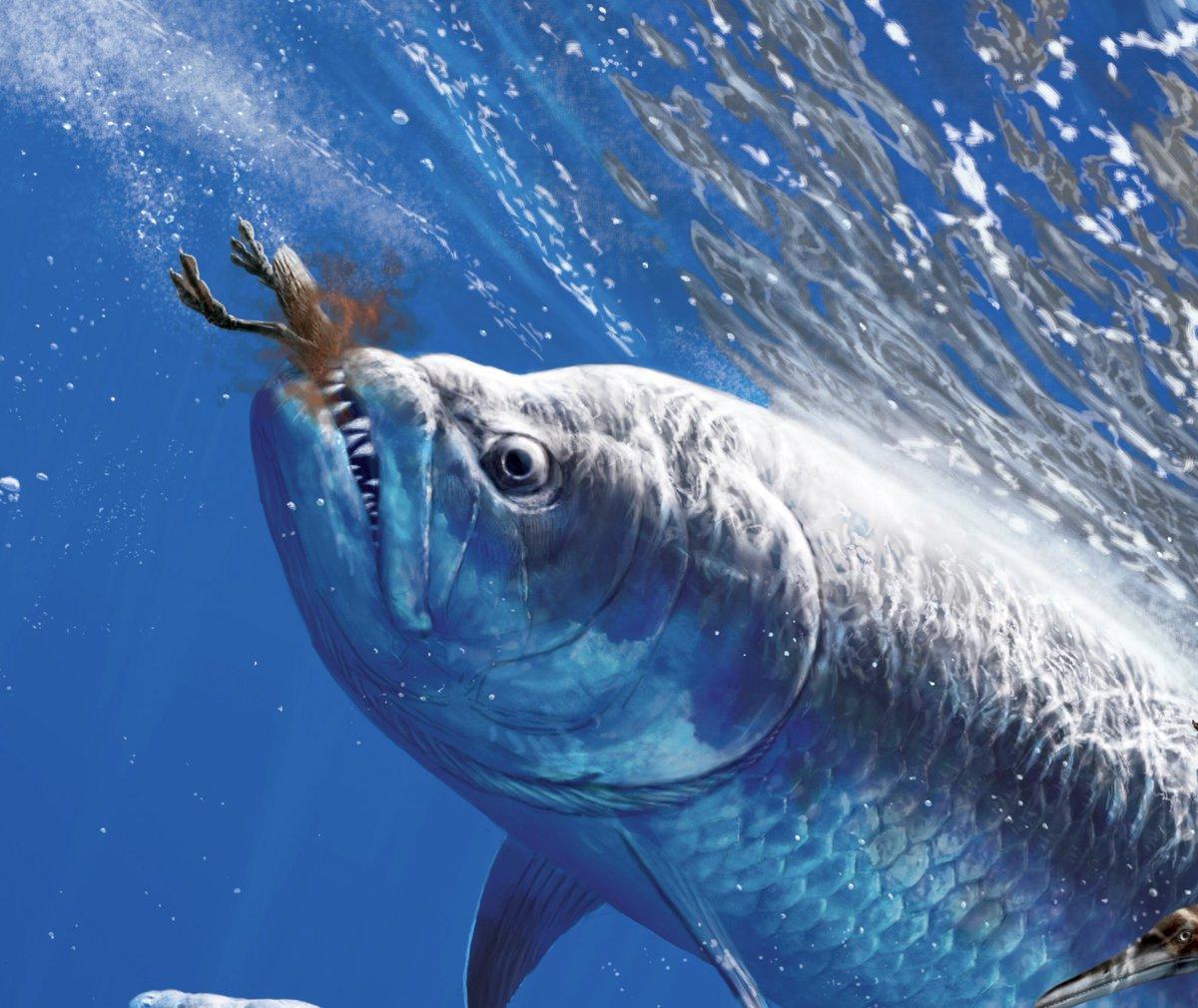xiphactinus fish - HD1200×1010