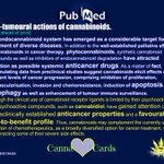 """https://t.co/JPUdpEGohY """"The endocannabinoid system has emerged as a considerable target for the treatment of diverse diseases."""" 😇 #Apoptosis #Autophagy #cancer #Cannabinoids #ECS #CannabinoidReceptors #Phytocannabinoids #CancerFearsCannabinoids"""