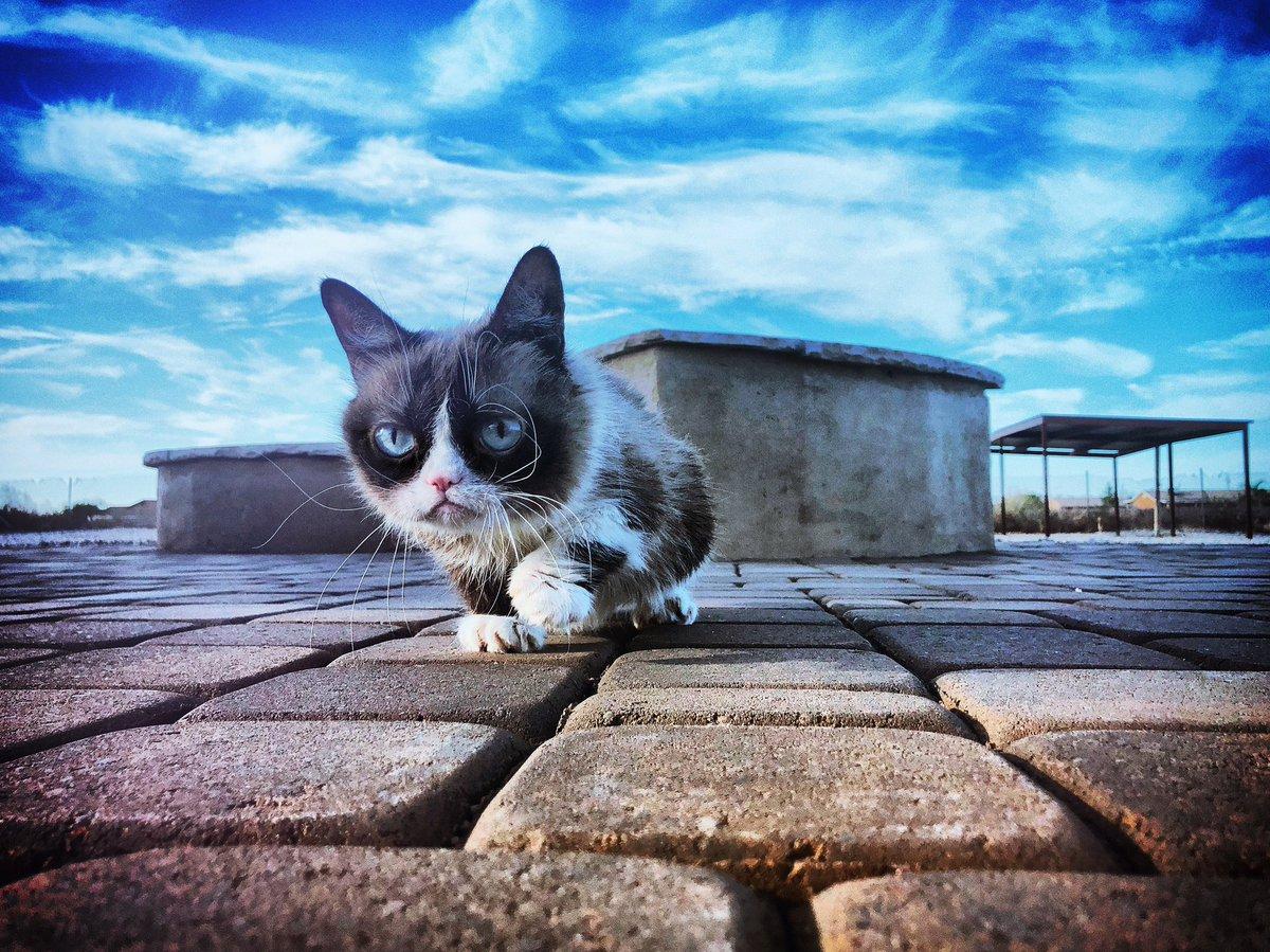 Grumpy Cat (@RealGrumpyCat) on Twitter photo 2018-07-19 23:02:33