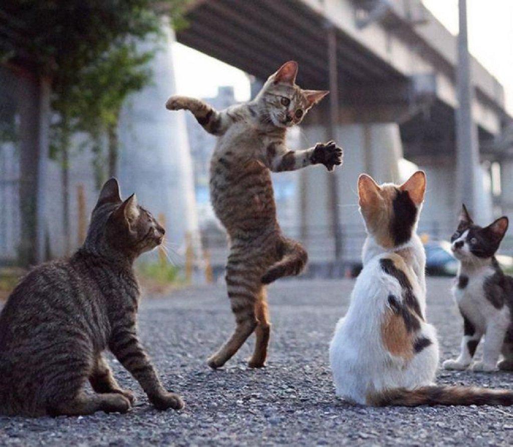 Коты танцуют картинки