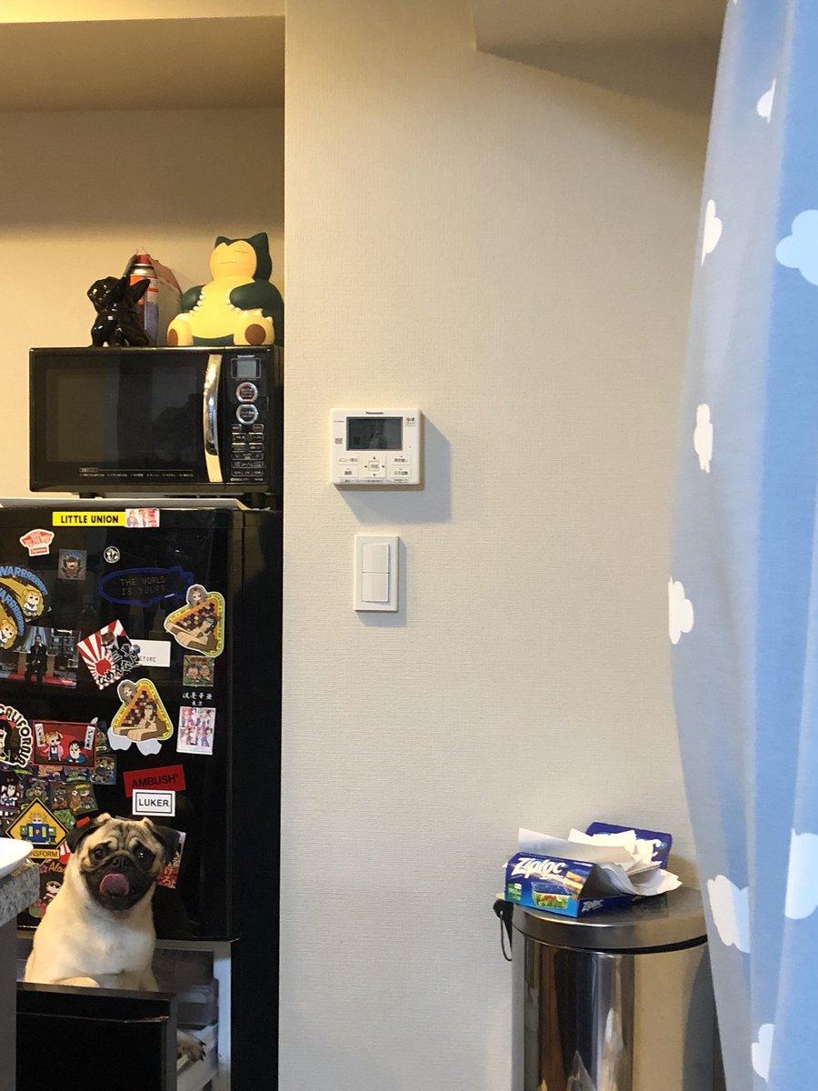 いやどうやって入ったのww冷蔵庫の中にすっぽりおさまる犬ww