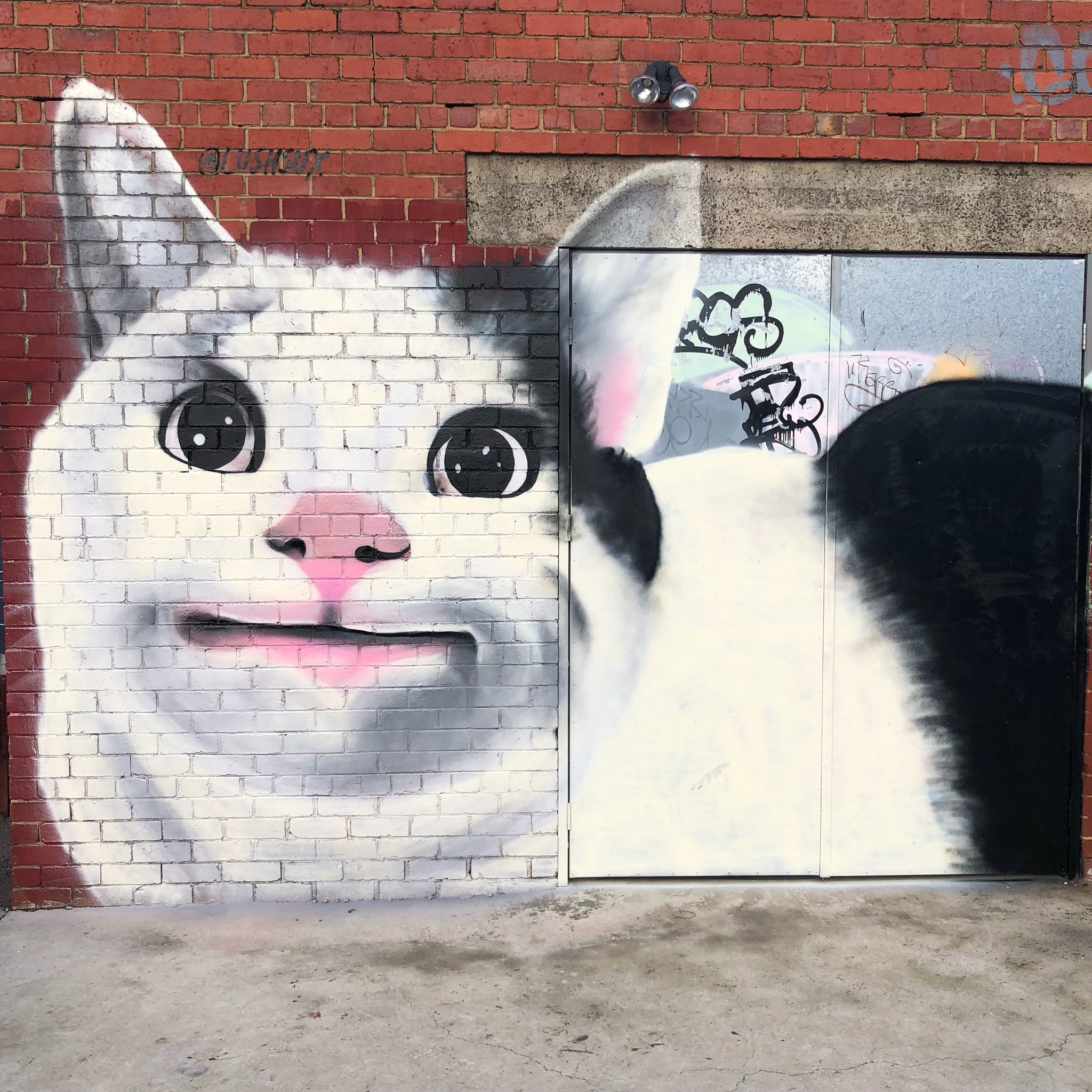 """@lushsux on Twitter: """"Is this a polite cat?…"""