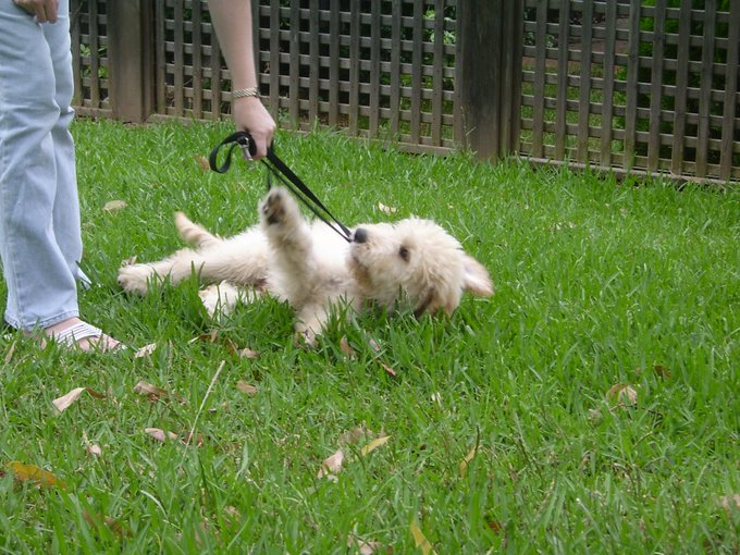 Me when i was little having my first play in the park #FlashbackFriday Photo
