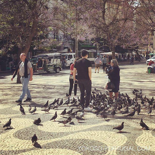 test ツイッターメディア - ポルトガルには、ハトに餌をあげるハトおばさんやハトおじさんが多数存在しています。 #リスボン #ポルトガル https://t.co/ntPsbSKBro