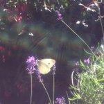 #ButterflyCount Twitter Photo