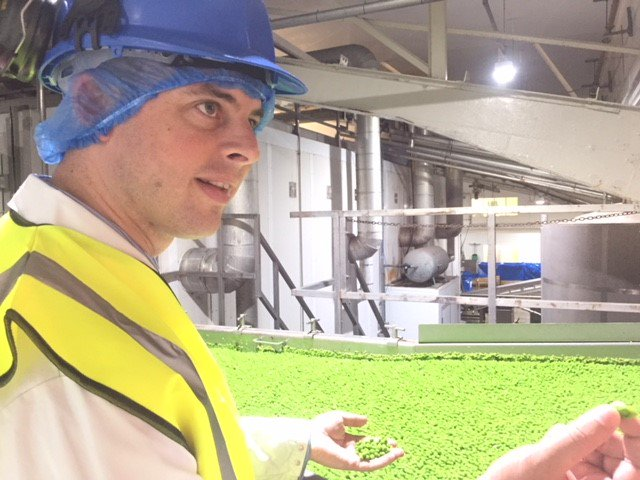A couple of summers ago I was driving a @FenPeasLtd  pea viner, seeing the field end of how Lincolnshire's fantastic local pea crop is harvested. Today I was delighted to visit   @GreenyardFrozen to see how this local product is processed. More- https://t.co/bUUg5xzYA0 #yespeas