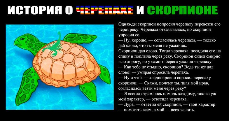 картинка скорпион и черепаха продаже