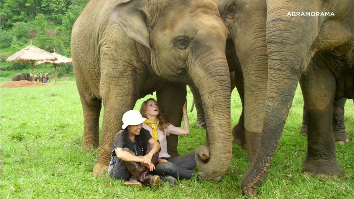 'Love & Bananas' documentary reveals struggle of Asian elephants https://t.co/r30kA5PQDD