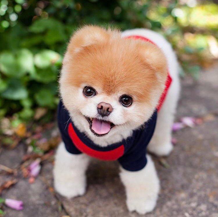 77d26b97d Mañana es el  DíaMundialDelPerro y si eres amante de los canes (y la moda