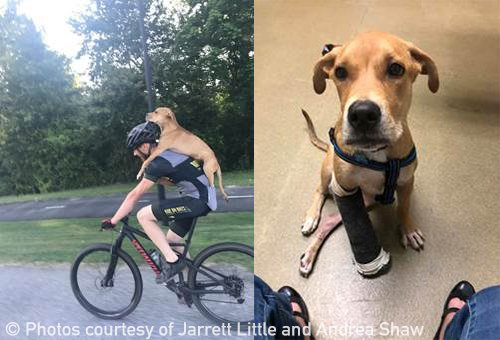 He's a hero for animals! ❤️ PETA is sending this cyclist a Compassionate Action Award for rescuing an injured dog named Columbo who had apparently been hit by a car. Look how he scooped the dog up & rode him to safety! A reminder that we can all step in to help animals in need.