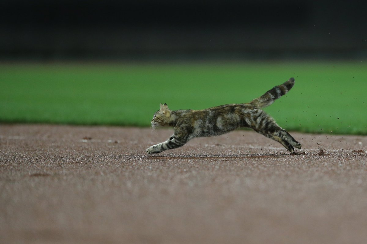 Cat Runs on Baseball Field