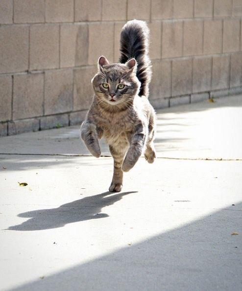 走る猫はカッコいい。