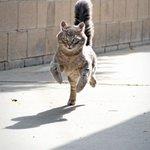 猫が走る姿は勇ましいな!スピード感のある写真がとってもすてきw