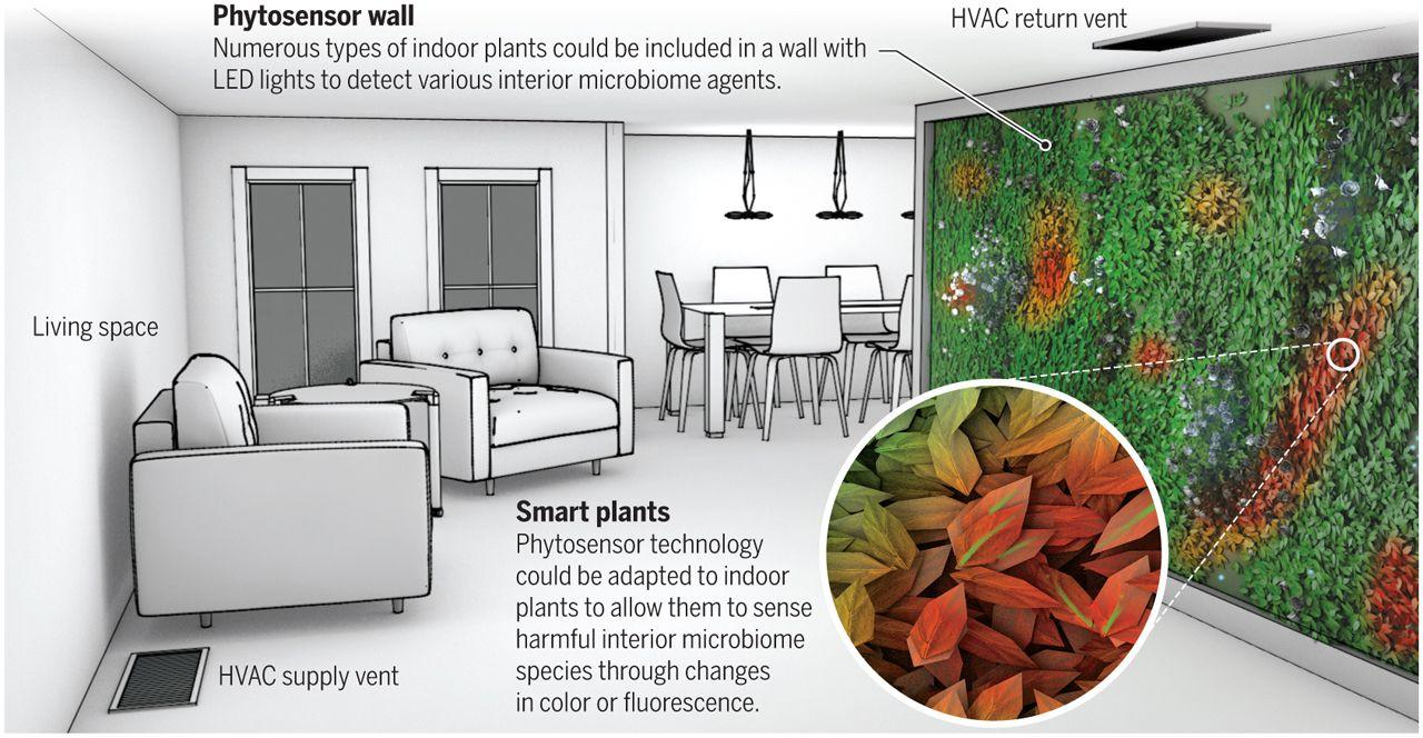 Des plantes d appartement modifiées pourraient servir de biocapteurs  d agents environnementaux pouvant nuire à notre santé, comme la moisissure,  ... 57e12599dd39