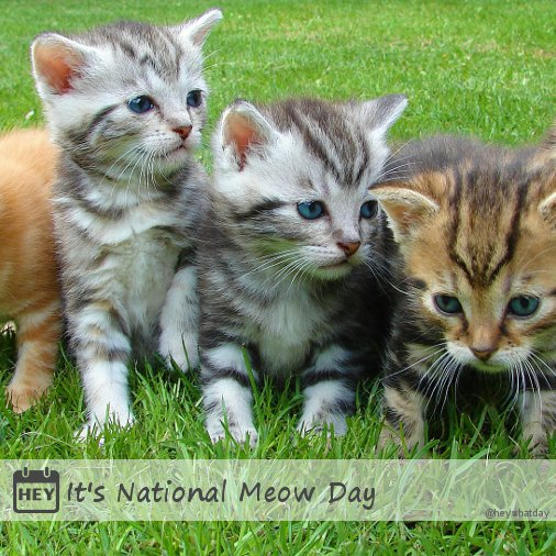heywhatday on twitter it s national meow day nationalmeowday