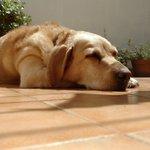 Día Mundial del Perro Twitter Photo