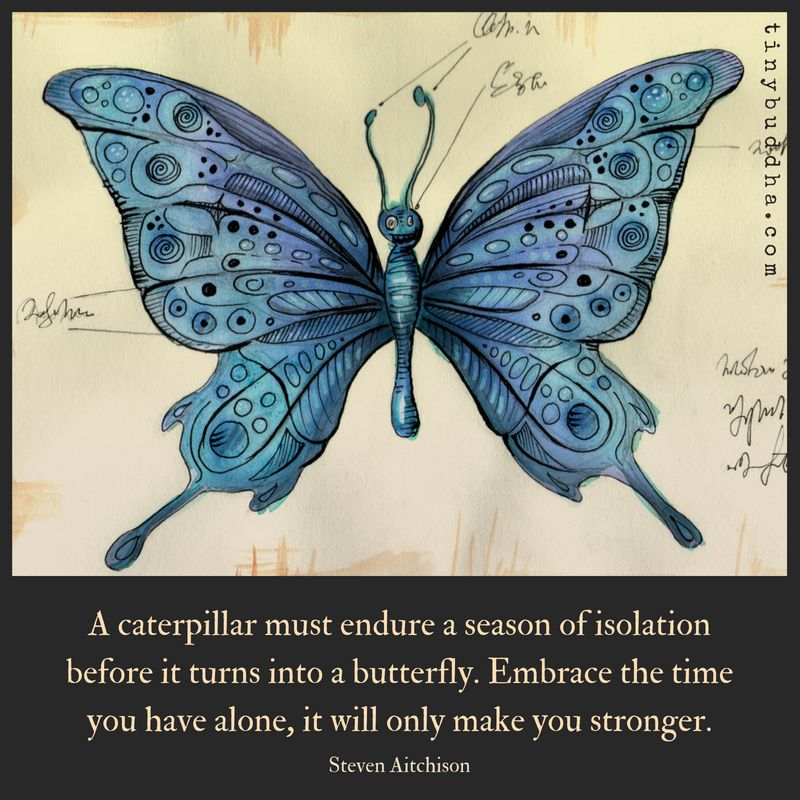 'A caterpillar must endure a season of isolation before it turns into a butterfly. Embrace the time you have alone, it will only make you stronger.' ~Steven Aitchison