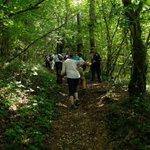 Back to Siccaridge Wood on this Wednesdays walk.