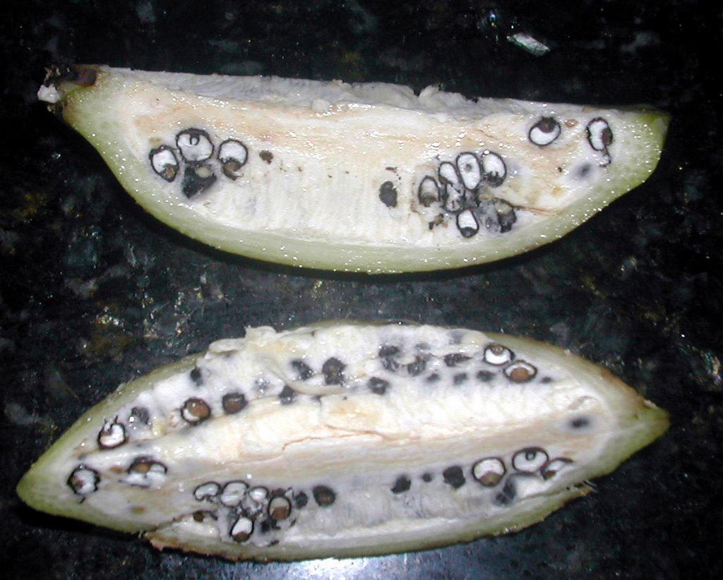 происходящими как выглядит настоящий банан фото изготовлению дидактического пособия